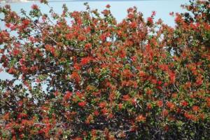 Eine Ratespiel für Tante Ines: was ist das hier für ein Busch, hat er 1,2,3,4 oder 5 Blüten ??????