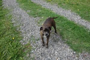 Evi, unser Guide in der Andenrose ( Hund von Hans)