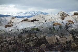 Cormorants Vögel, die sehen ein bisschen aus wie Pinguine