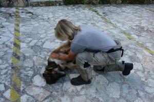 Der Hotelhund, einer von sehr wenigen Hunden hier, denen es gut geht